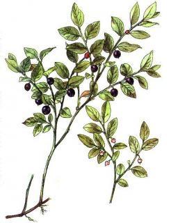 Seznam jedlých a léčivých rostlin